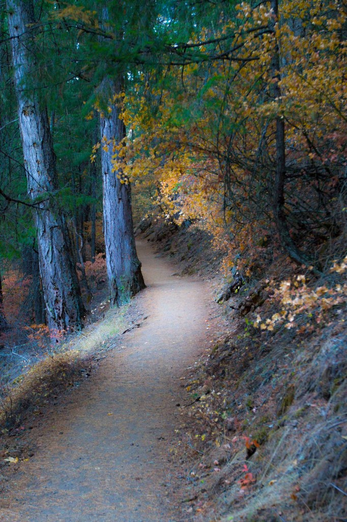 California Travel Videos - path to Burney Falls