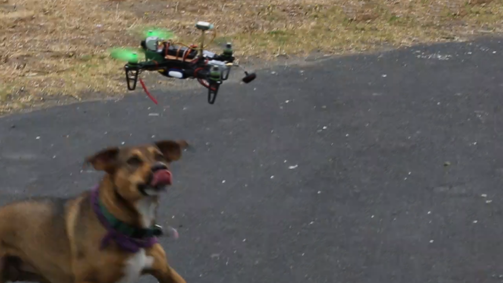 Dogs love quadcopters, too!