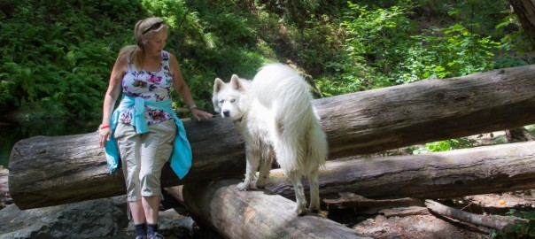cTv, Samuel P Taylor State Park #2,, Hiking, History, Play deep in the Redwoods