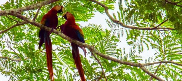 cTv, Costa Rica Rainforest – Crocodiles, Poison Dart Frogs, Monkeys