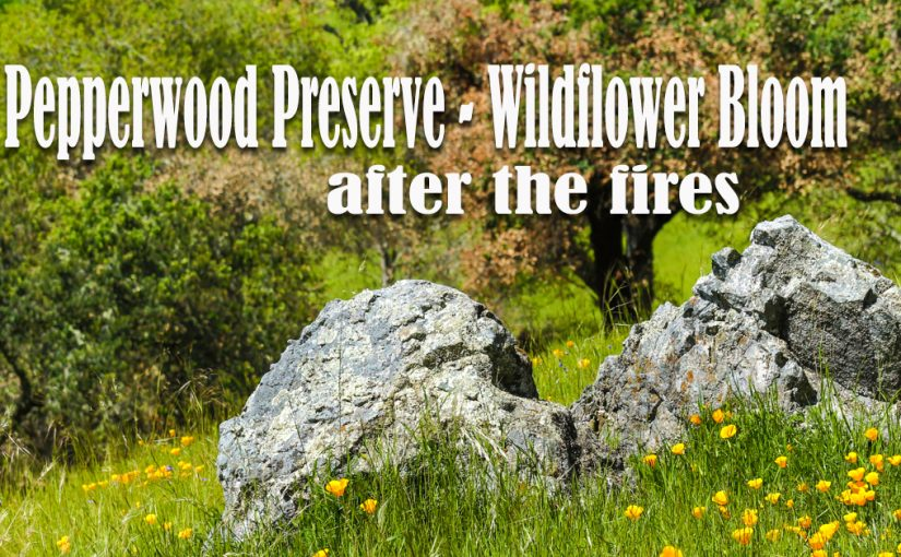 Pepperwood Preserve – Wildflower Bloom